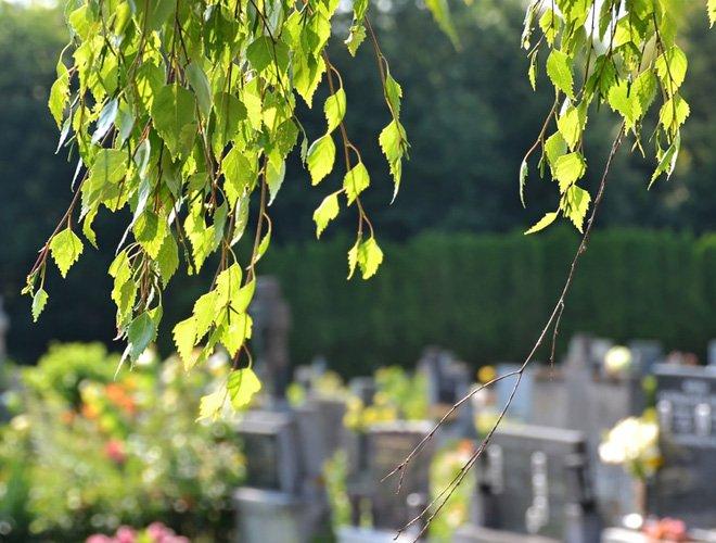 Blätter im Wind über Friedhof